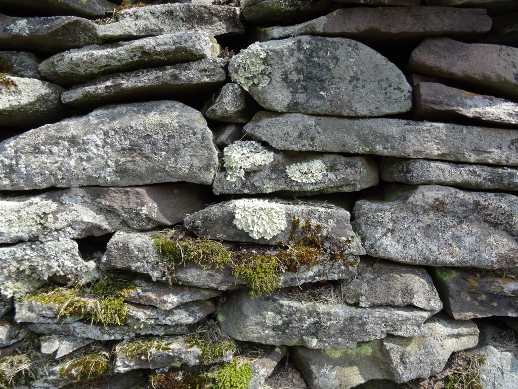 Stone wall, Catskill Mountains, NY